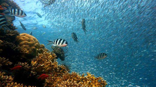 Voyager au Mexique: les meilleurs spots de plongée