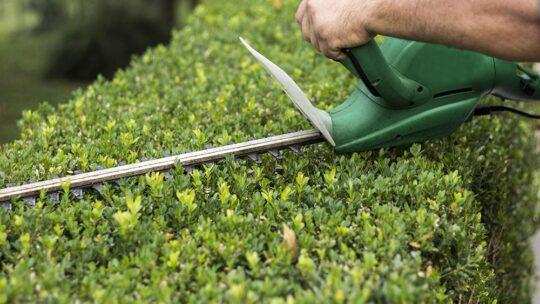 Bricojardin 31, votre jardinier sur Toulouse, élagage, abattage et nettoyage de vos espaces verts