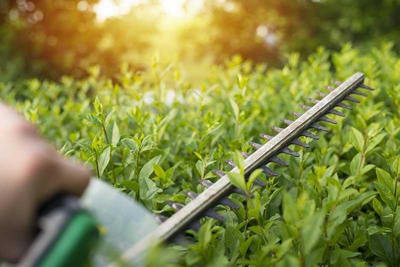 Gardez votre espace vert en bonne santé avec les conseils d'un professionnel